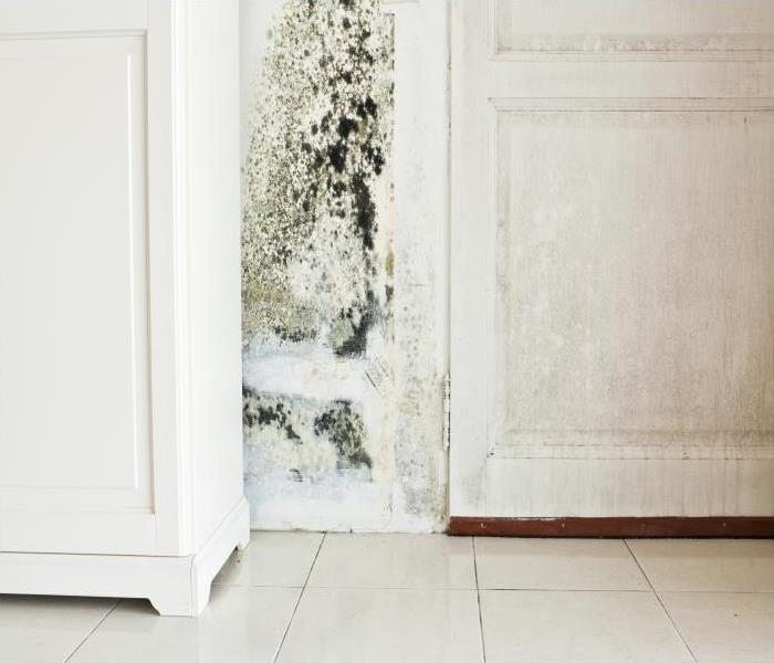 Mold Remediation Musty Odor Deodorization Following Mold Damage In Your New Milford Home