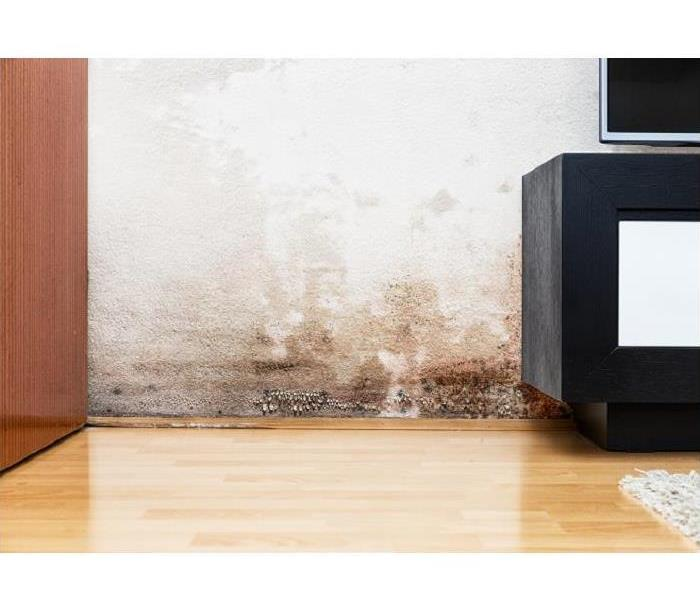 Mold Remediation How Mold in Your New Milford Home Damages Your Personal Belongings