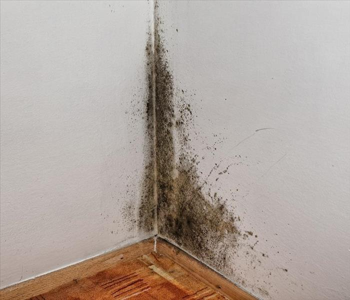 Mold Remediation Learn to Salvage Your Items During Mold Damage in Bergen County