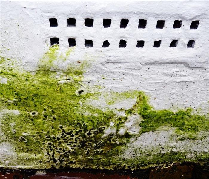 Mold Remediation Mold Damage in New Milford--Keep Your Basement or Crawlspace Clean and Dry