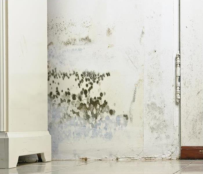 Mold Remediation When Your Furniture Succumbs To Mold Damage In New Milford