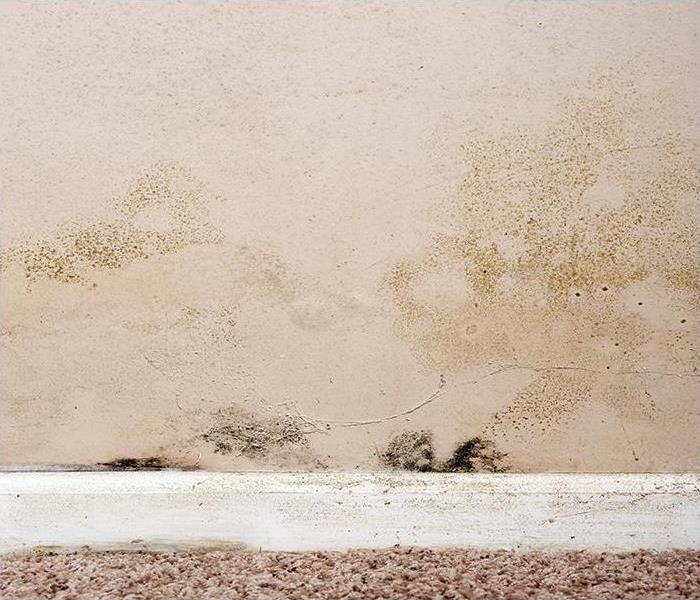 Mold Remediation Reclaiming Your Belongings From Mold Damage In Teaneck
