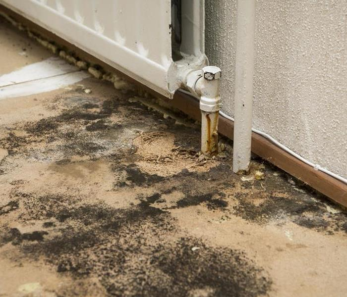 Mold Remediation How Remediation Companies Focus on Restoring Your Belongings in Your Bergen County Properties