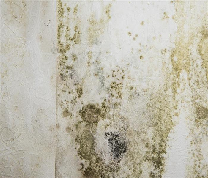 Mold Remediation Mold Assessment and Remediation in New Milford