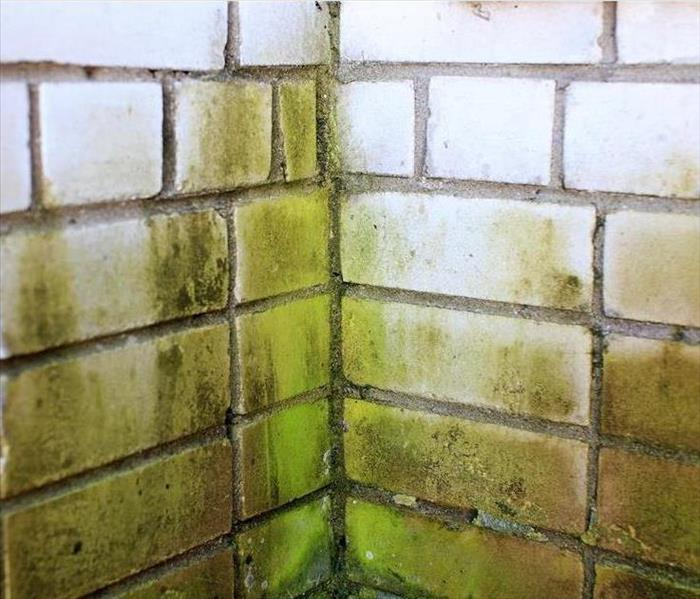 Mold Remediation Mold Damage can Hide in Your Bergen County Home, Including any Brick or Concrete Elements